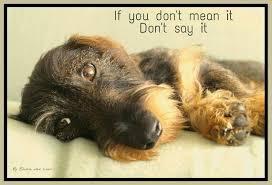 Wiener Dog Meme - pin by terri borkgren on doxie wire 5 pinterest dachshunds