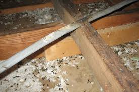 damage caused by rats in the attic photographs