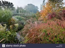 marchants sussex early autumn fall borders perennials ornamental