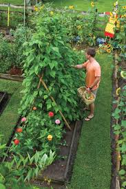 fruit tree garden layout plant vegetable in your back yard southern living