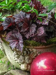 Garden Sphere Balls The Belle Of The Foliage Garden Ball Fine Foliage