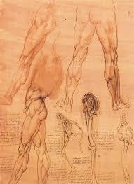 studies of legs of man and the leg of a horse by leonardo da vinci