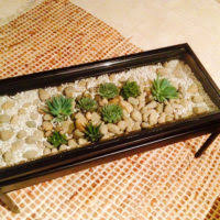 living room rectangle terrarium succulent plants coffee table