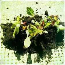a little pothole veggie garden u2014 the pothole gardener