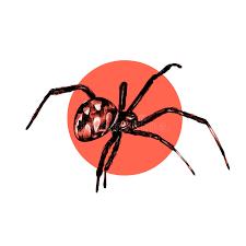 spider sketch drawing stock illustration image 89377101