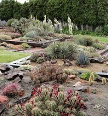 Washington State Botanical Gardens The Desert Botanical Garden A Beautiful Experience Arizona