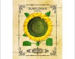 sunflower seed packets vintage illustration parsnip seed packet digital