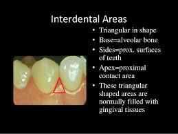 Normal Bone Anatomy And Physiology Dental Anatomy U0026 Physiology Of Permanent Teeth