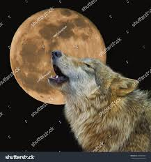 wolf howling moon stock illustration 250680994 shutterstock