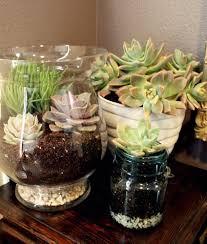 diy succulent terrarium hometalk