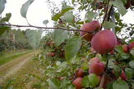 experience autumn at edwards apple orchard west