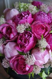 Flower Pictures 1511 Best Flowers Images On Pinterest Pretty Flowers Flowers