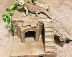 přes 25 nejlepších nápadů na téma reptile terrarium na pinterestu