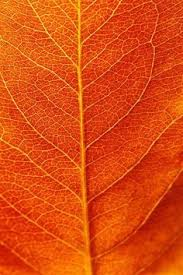 best orange color best burnt orange paint color bing images colors pinterest