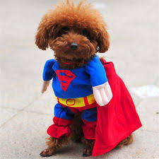 Yorkie Halloween Costumes Superman Dog Costume Ebay