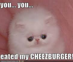 Meme Cheezburger - meme cheezburger 28 images internet cat memes memes i can haz