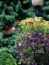 Fragrant Container Plants - 51 best full sun containers images on pinterest garden container