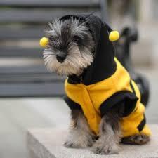 bee pet puppy coat apparel fleece clothes dog cat hoodie