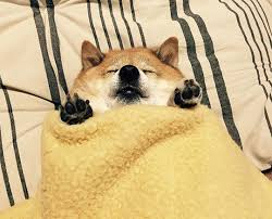 Meme Generator Doge - fat doge blank template imgflip
