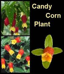 List Of Tropical Plants Names - 77 best house plants images on pinterest indoor gardening