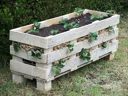 great ways to grow strawberries in containers