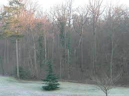 chambre privé chambre privé coye la forêt avis récents