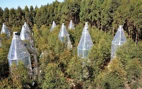 cool trees trees sweat to keep cool scientific american