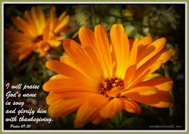 scriptures of thanksgiving and praise picturescriptures creation is not silent it sings his praise