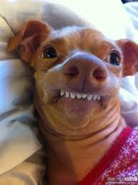 Bad Teeth Meme - meme template search imgflip
