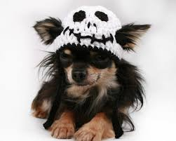 Halloween Skeleton Dog by Dog Hat Crochet Halloween Skeleton Beanie For Dogs Pet It Dog