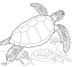 simple sea turtle drawing sea turtle coloring page free printable