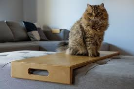 a cat two sofa trays and too many fucks