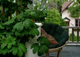 Hops On Trellis Water Conservation In The Garden Principles Of Xeriscaping