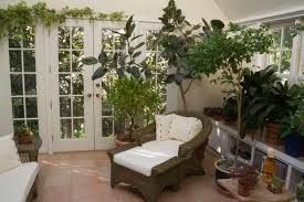 plants at home interior plant design sacramento ca the tropical plant house