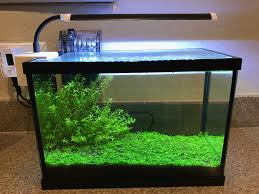 monte carlo without co2 the planted tank forum