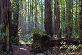 the big trees area