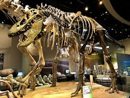 experience perot museum of nature and science jcutrer