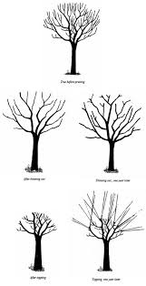 Garden Tree Types - pruning large trees thinning out vs topping umn extension
