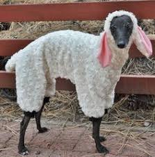 Funny Halloween Animal Costumes 10 Dogs Disguised Animals Halloween Halloween