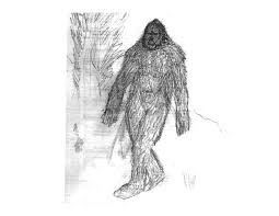 eyewitness drawing gallery u2013 the discovery of the sasquatch