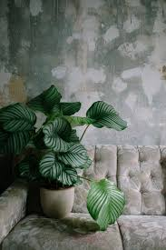 the studio plants all over plants indoor and wall textures