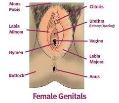 woman s virgina vaginal lightening vaginal tightening hymen repair dr jill