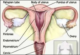 Images Of A Bidet The Benefits Of Using A Bidet For Menstruating Women Review Bidets