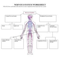 human brain and central nervous system diagram human anatomy body