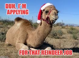 Camel Memes - christmas camel memes imgflip