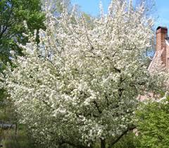 flowering crabapple trees with photos of various varieties