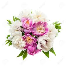 Peony Flowers Peony Stock Photos U0026 Pictures Royalty Free Peony Images And Stock