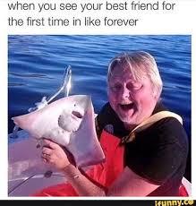 Stingray Meme - image gallery stingray meme