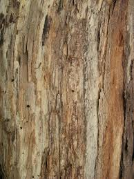 wood pattern samuel beckett summer school