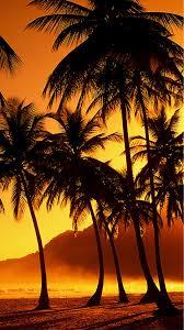 Palm Tree Wallpaper Palm Tree Background Iphone 6 Wallpaper 22011 Beach Iphone 6